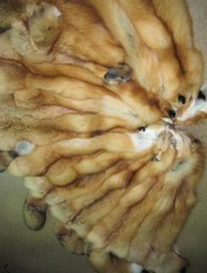 шкурки лисицы