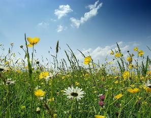 Поле сон-травы