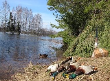 Охота на озере