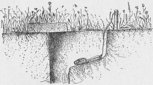 Установка капкана у вертикальной норы суслика