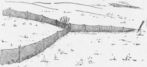 Вентерь на куропатку