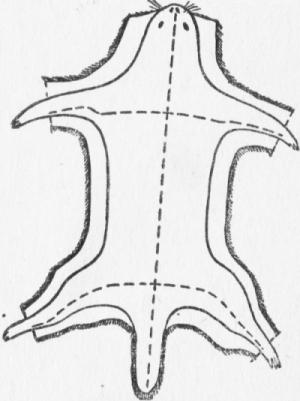 Линии разреза шкурки при съемке