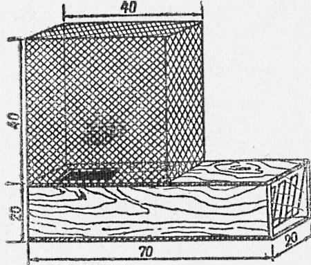 Ящичная ловушка на ондатру с садком