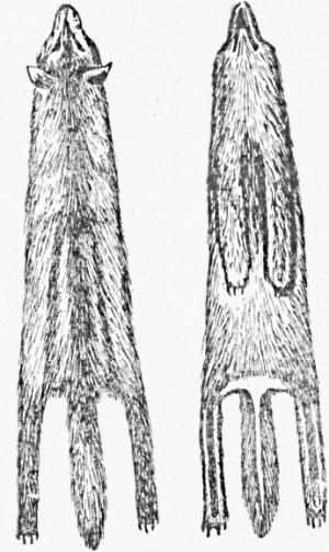 Правильно оправленая шкурка волка