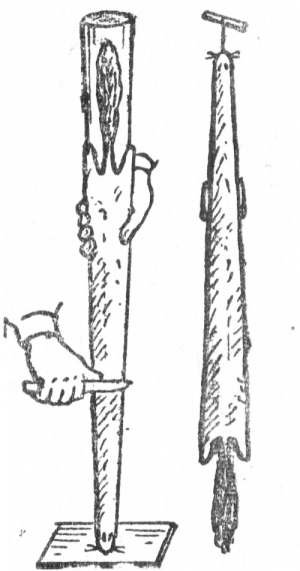 Правильно оправленая шкурка белого хоря