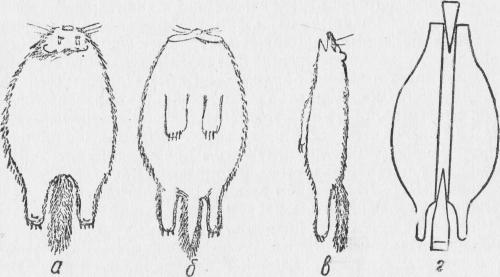 Шкурка соболя баргузинского кряжа