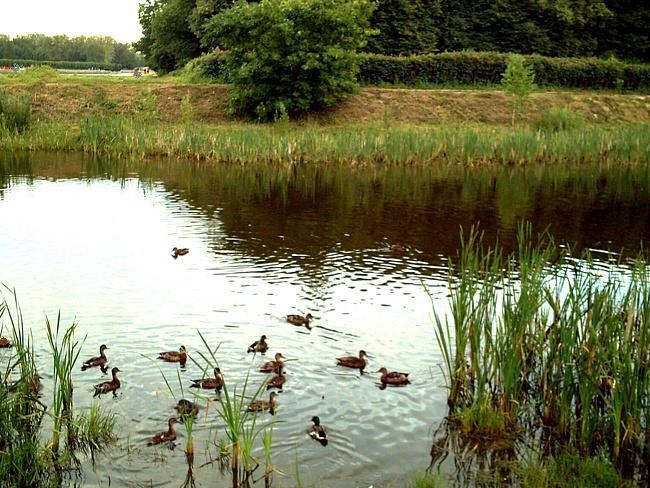Утки на озере