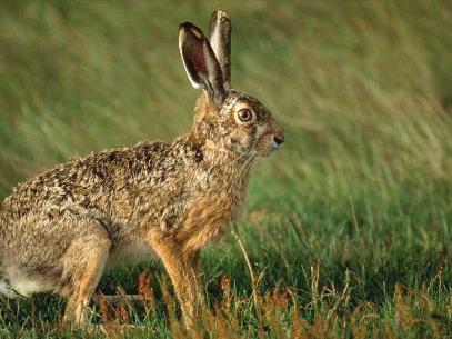Охота на зайца из засидки, Охотник