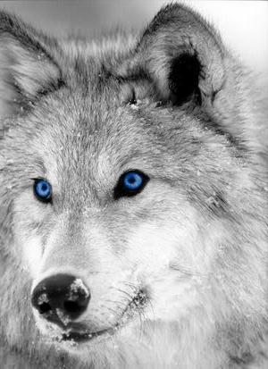 Стрельба волков на засидках, Охотник