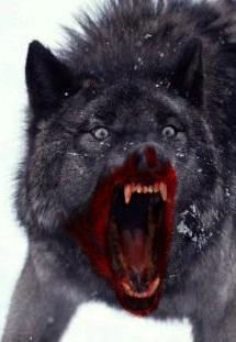 Во сне укусил бешенный волк