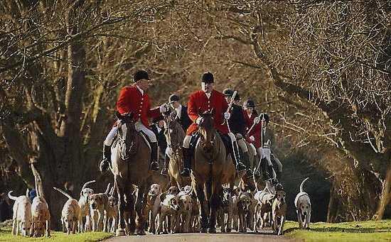 Охота на лис в Англии
