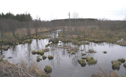Охота в болоте