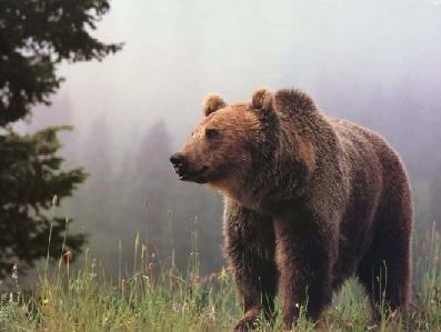 Медведь в горах