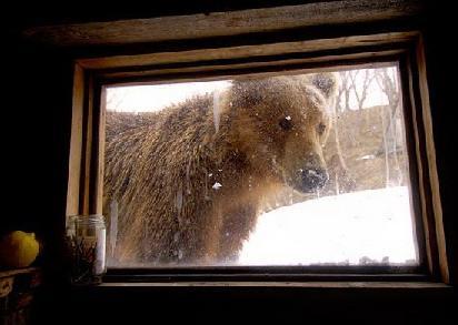 Медведь заглянул в окно
